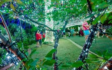 Image for Christmas Lights ACT 2017 Event