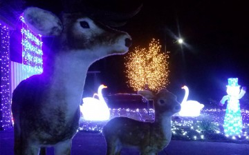 Seville Grove Christmas Lights 2017 Event Image